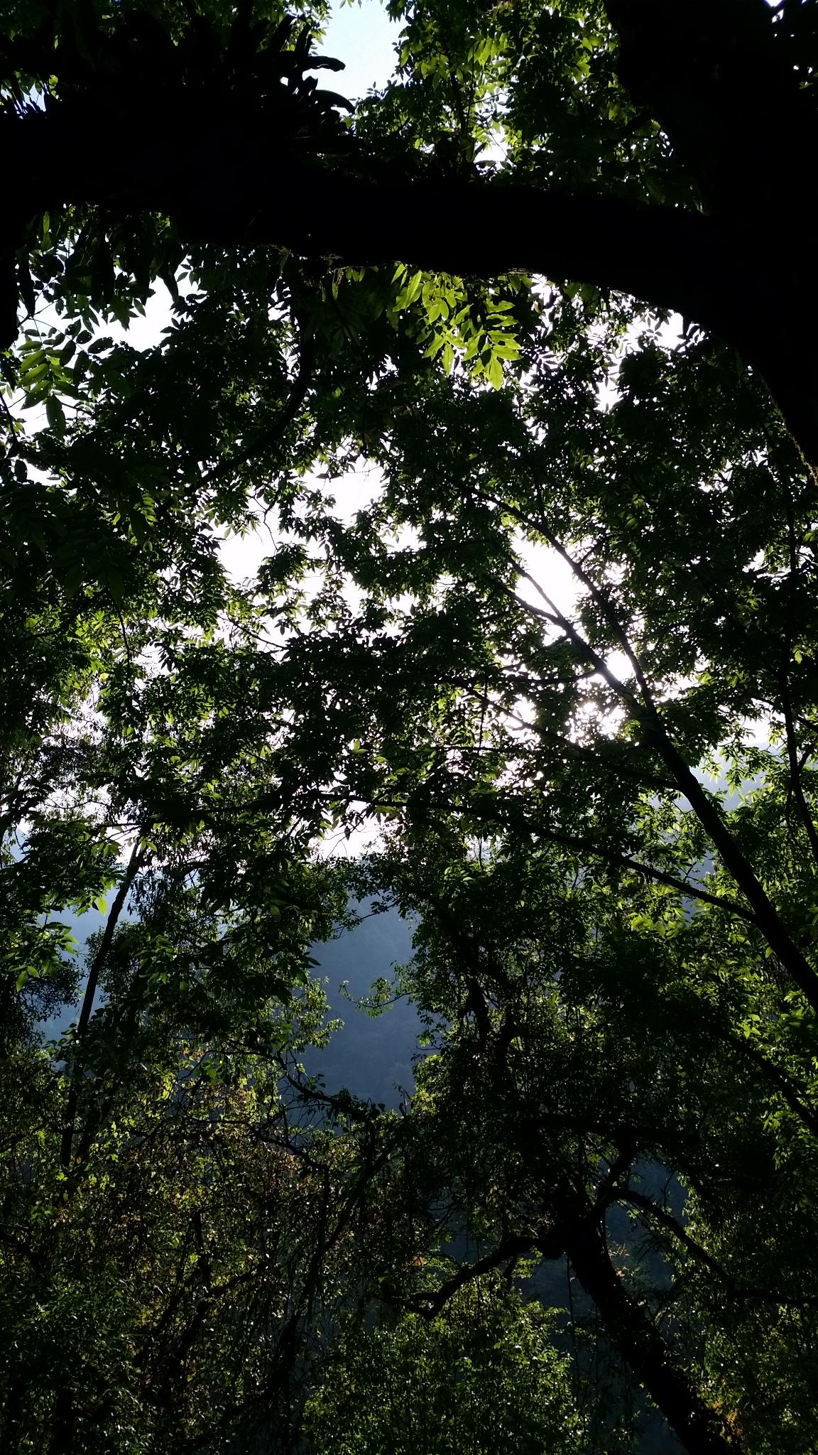 Hutan di trek Annapurna Basecamp